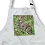 click on Rabbit Eastern Cottontail to enlarge!