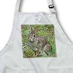 click on Rabbit Eastern Cottontail 2 to enlarge!