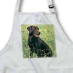 click on Chocolate Labrador Retriever to enlarge!
