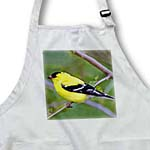 click on American Gold Finch to enlarge!