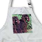 click on Irish Water Spaniel to enlarge!