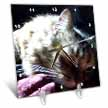 click on Gorgeous Maine Coon Cat Lazing In The Sun to enlarge!