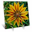 click on Gazania Yellow Flower Hibiscus Coast New Zealand to enlarge!