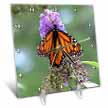 click on Butterfly Flowers Monarch Orange Purple to enlarge!