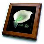 click on Calla Lily Flowers - Photography Flowers to enlarge!