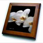 click on Painted Orchids - Photography Flowers to enlarge!