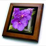 click on Purple Orchid Flowers - Photography Flowers to enlarge!