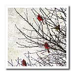 click on Cardinals Photographed by Angelandspot to enlarge!