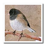 click on Junco Bird to enlarge!