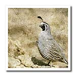 click on California Quail With Textures to enlarge!