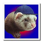 click on Ferret Wearing Hat to enlarge!