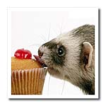 click on Ferret Eating Cupcake to enlarge!