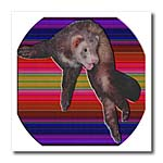 click on Dancing Ferret to enlarge!