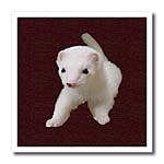 click on Baby Albino Ferret to enlarge!