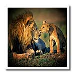 click on Lions Father and Son to enlarge!