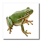 click on Green Frog to enlarge!