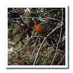 click on Painted Robin to enlarge!
