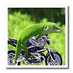 click on Gecko Rider to enlarge!