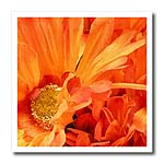 click on Bright orange Flowers to enlarge!