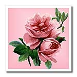 click on Classic Pink Rose to enlarge!