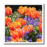 click on Orange and Blue Flowers to enlarge!