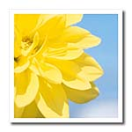click on Yellow Flower Petals on Blue to enlarge!
