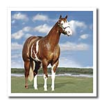 click on Champion Paint Quarter Horse to enlarge!