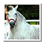 click on Andalusian Gelding to enlarge!