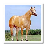 click on Palomino Quarter Horse to enlarge!