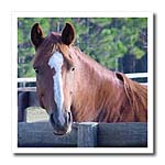 click on Quarter Horse Mare to enlarge!