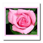 click on Pale Pink Rose to enlarge!