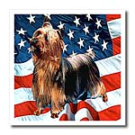 click on Silky Terrier to enlarge!