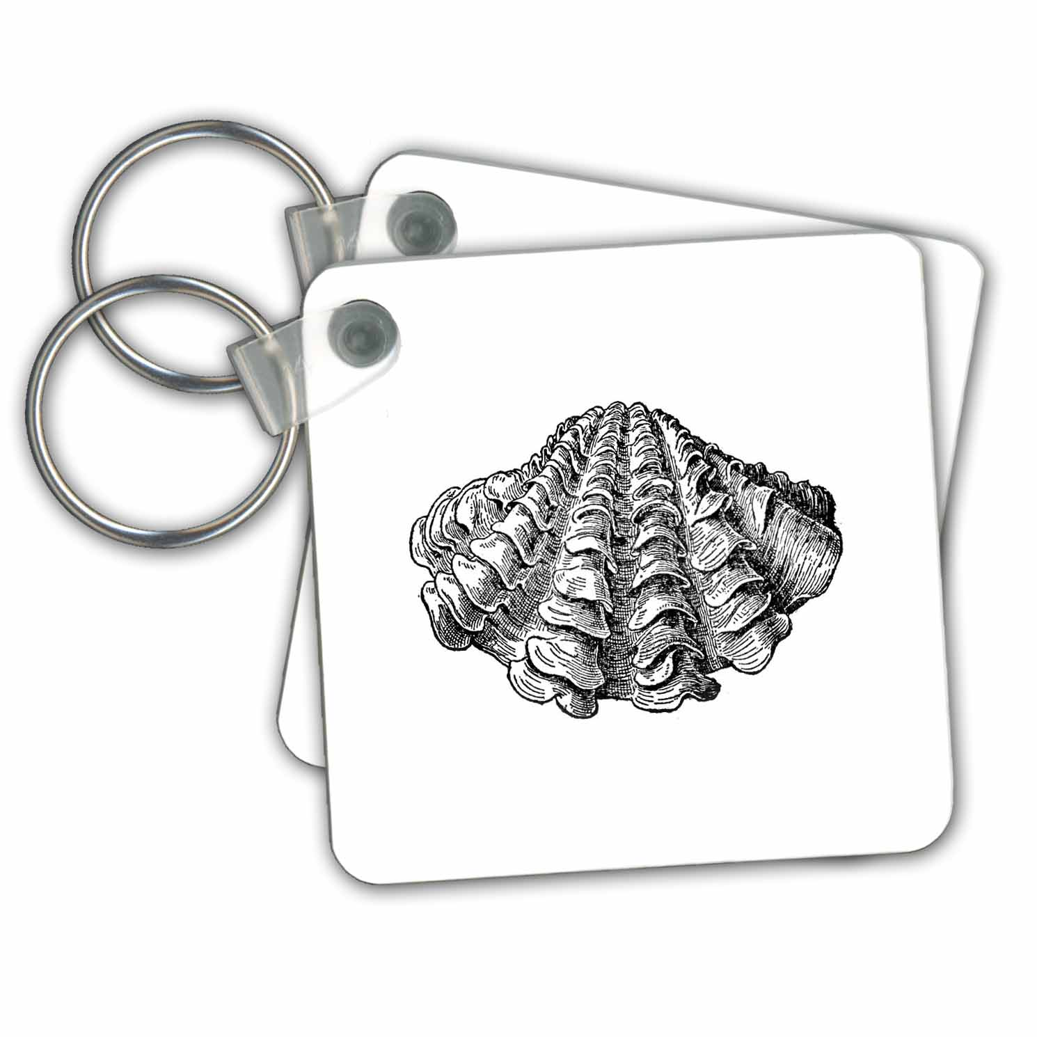 3dRose - InspirationzStore Vintage Art - Black and white seashell illustration. Sea shell clam beach ocean life - Key Chains at Sears.com