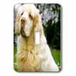 click on Clumber Spaniel to enlarge!