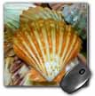 click on Sea Shells Up close to enlarge!