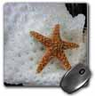 click on Starfish On Sponge to enlarge!