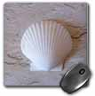 click on One Perfect Shell to enlarge!