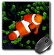 click on Clown Anemone Fish to enlarge!