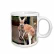 click on Red Kangaroo to enlarge!