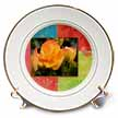 click on Orange Framed Begonias, Flowers to enlarge!