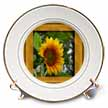 click on Sunflower in a Frame to enlarge!