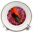 click on Beautiful Orange Tanager With Cherry Blossoms to enlarge!