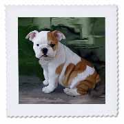 3dRose - Dogs Bulldog - British Bulldog Puppy - Quilt Squares at Sears.com