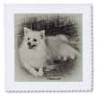 click on American Eskimo Dog to enlarge!