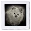 click on Pomeranian Portrait to enlarge!