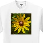 click on Black Eyed Susan by Angelandspot to enlarge!