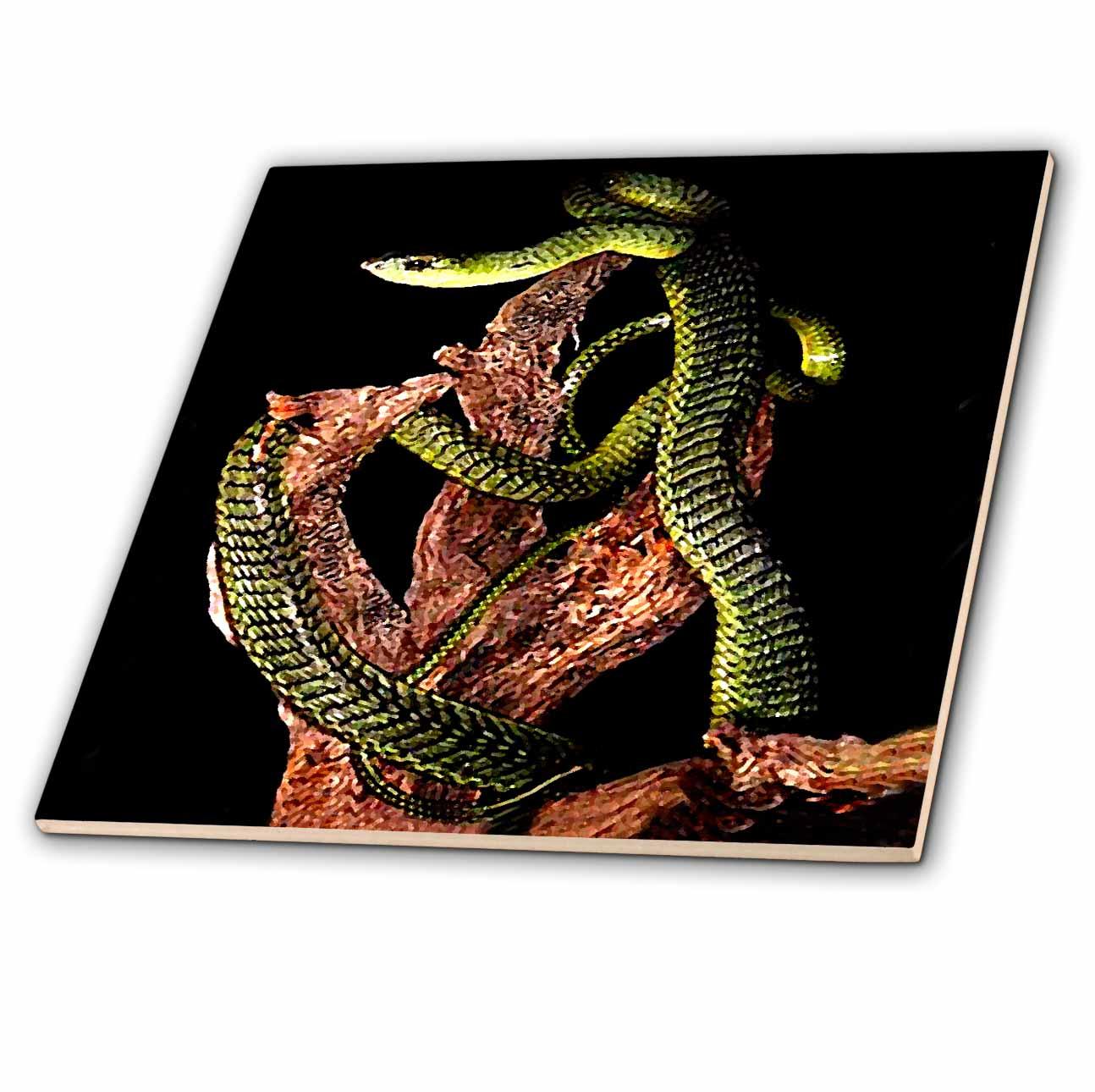 Boomslang Snake Ceramic Tile-Coaster Snakes