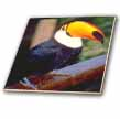click on Toucan to enlarge!
