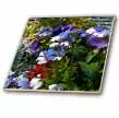 click on Yukon Territory Flower Garden White and Blue Flowers to enlarge!
