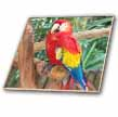 click on Live Parrot On Tropical Tree  to enlarge!